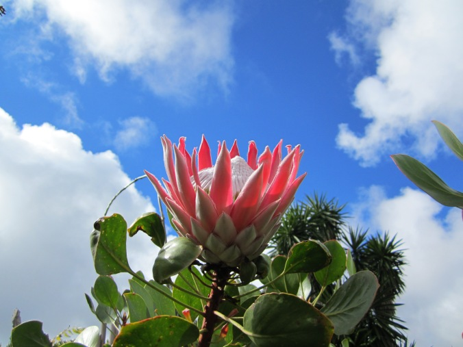 Let all the flowers blossom under the clouds :) Took this photo @ La Gomera, February 2012